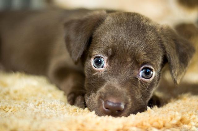 Ako odnaučiť psíka demolovať náš domov